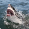anders-shark-1