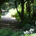 wander through the garden