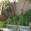 Courtyard garden and sunbird