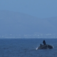 cape whale coast route; southern right whale